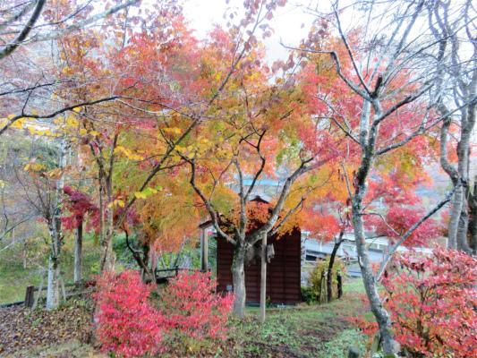 びりゅう館周辺の紅葉