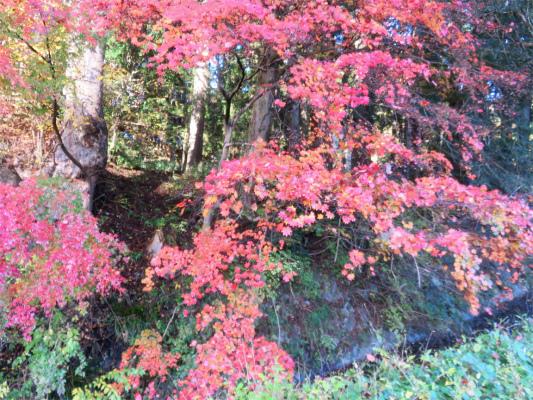 坪山登山口周辺の紅葉