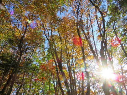 朝日に映える紅葉した木々