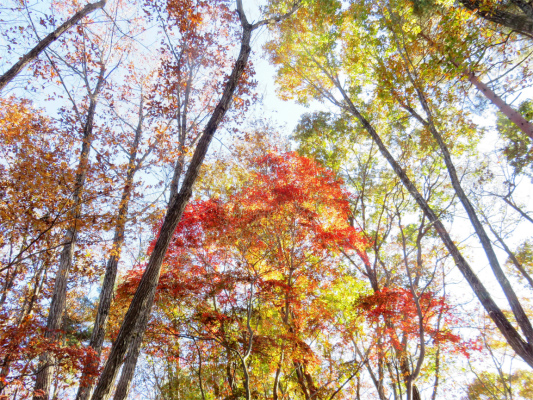 上を見ても紅葉、左右を見ても紅葉