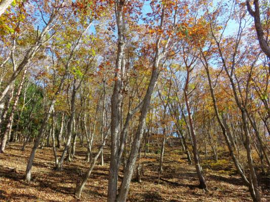 槙寄山周辺の紅葉の様子