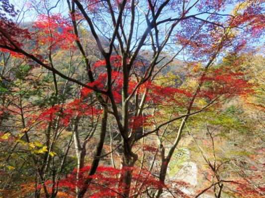三条の湯周辺の紅葉