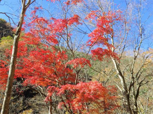 今年最後の紅葉の景色
