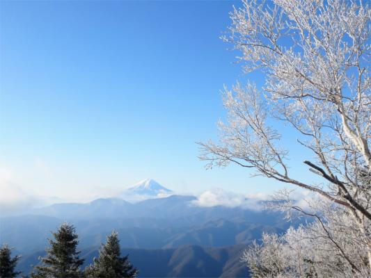 富士山と霧氷の夢のコラボレーション