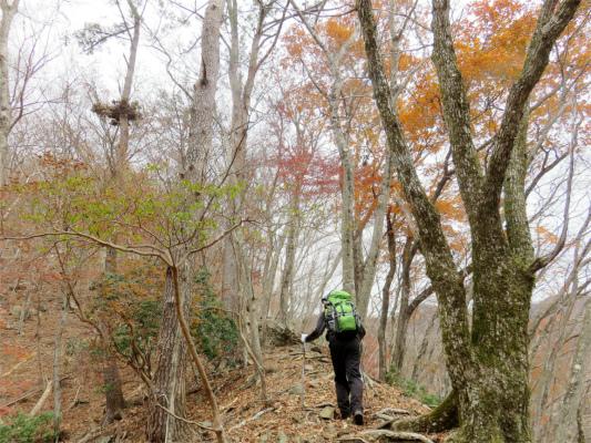 人工林から天然林(広葉樹)の森
