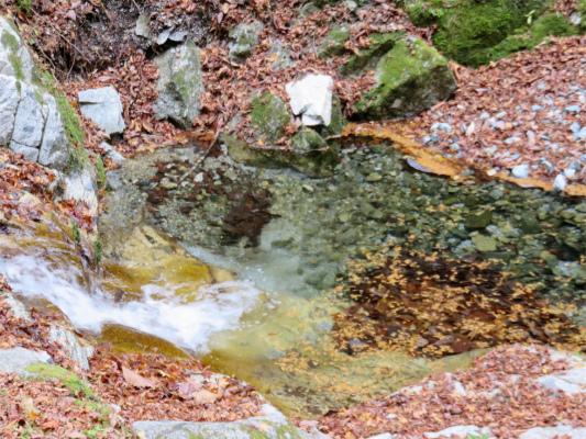 丹沢の生水