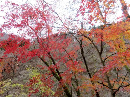 マルガヤ尾根紅葉