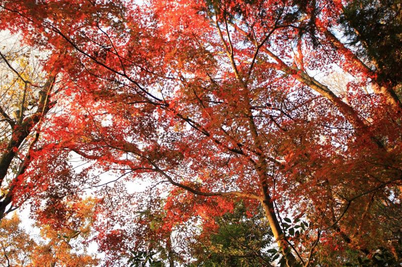 箱根周辺の紅葉