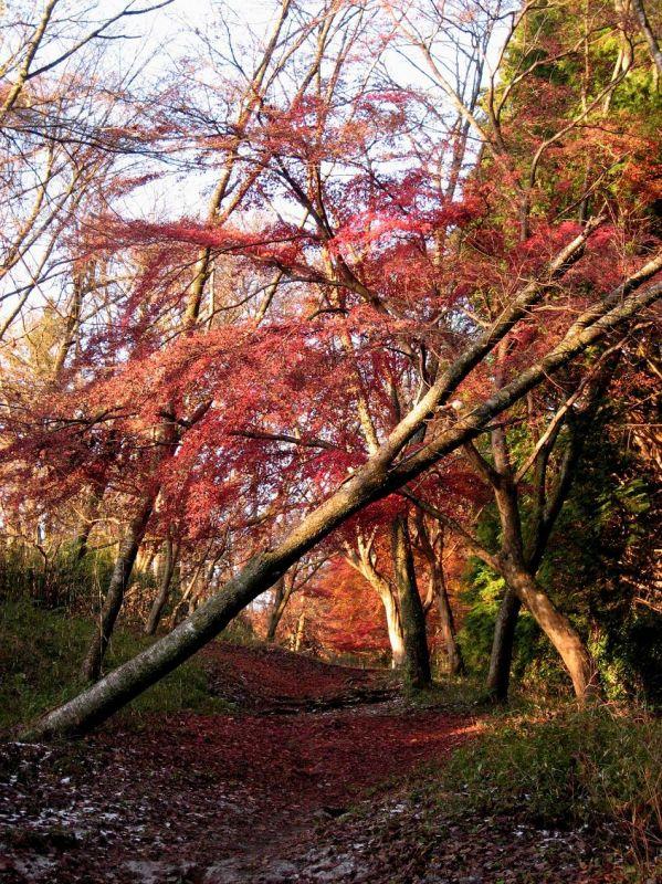 箱根のハイキング癒しのコース