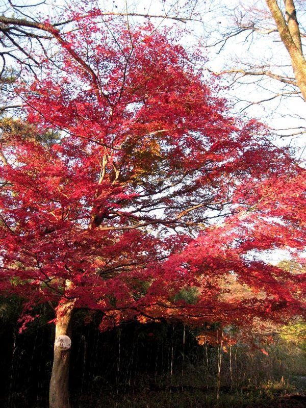 雄大な箱根の自然