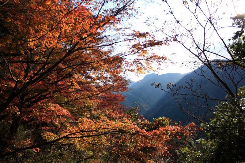飛竜ノ滝周辺の紅葉