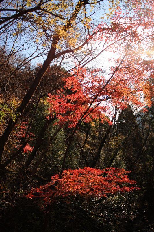 紅葉が綺麗紅葉が綺麗