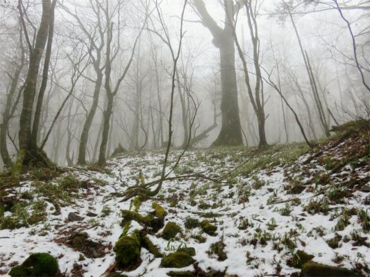 笠取山周辺は雪