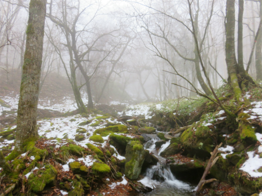 ガスと苔と雪景色