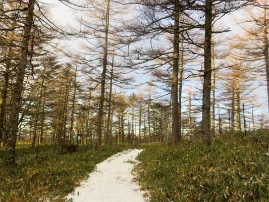 笠取山から笠取小屋までは雰囲気の良い道