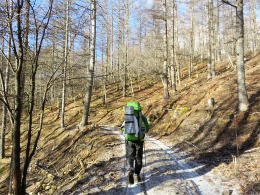 ヤブ沢から白沢峠林道歩き