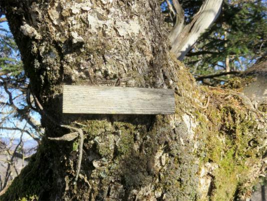 木戸岩(標高1706m)