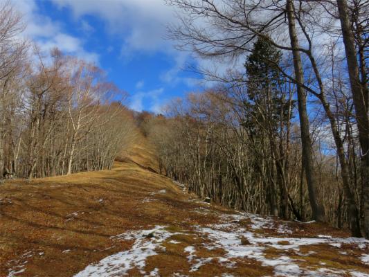 鷹ノ巣山登山道
