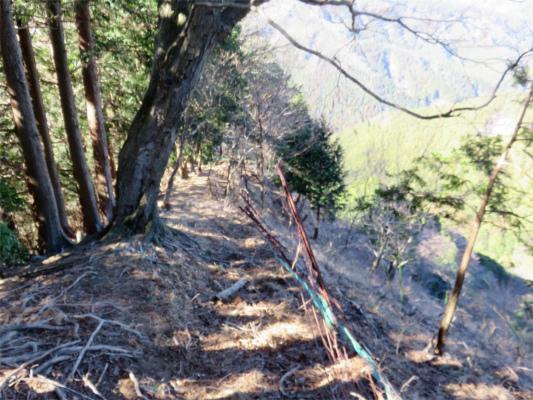 柵沿いの道