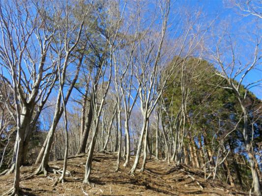 よもぎ尾根自然林