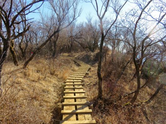 緩やかな木道歩き