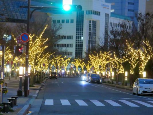 東京表参道を彷彿とさせる街路樹のイルミネーション