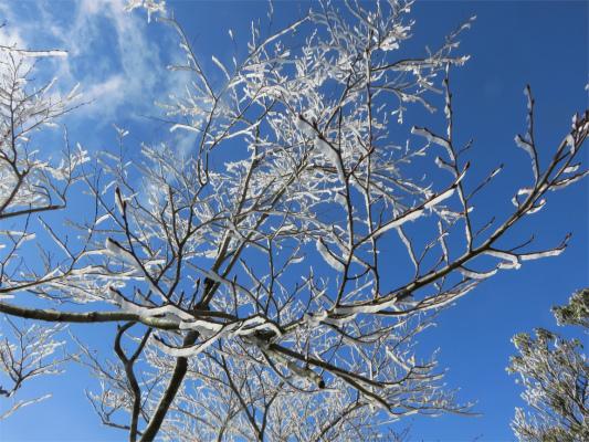 霧氷を見ると丹沢にも冬