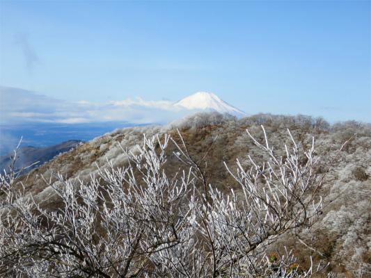 丹沢の霧氷と富士山のコラボ