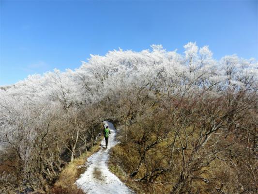 丹沢の霧氷はやっぱり美しい