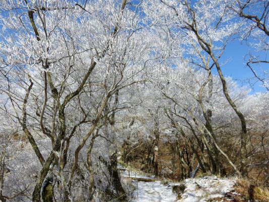 今シーズン最高の霧氷の景色