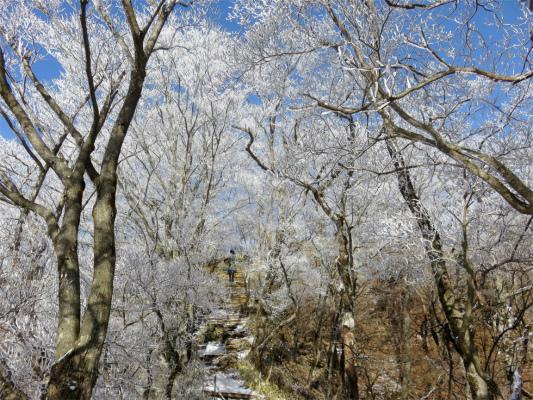 霧氷の丹沢冬景色と相方