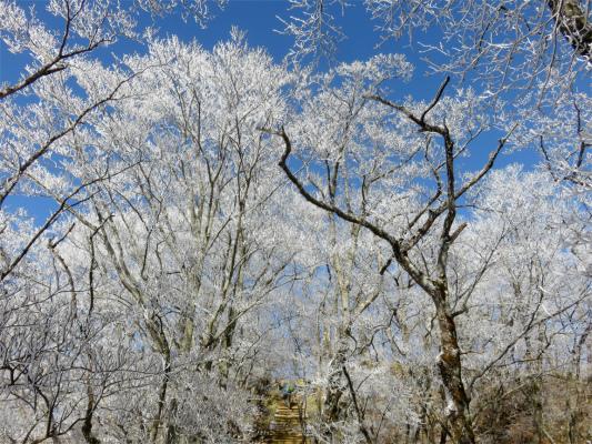 花立山荘塔ノ岳は霧氷が出来やすい地形