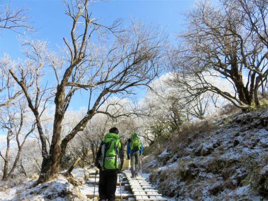 塔ノ岳までの登山道も霧氷が綺麗