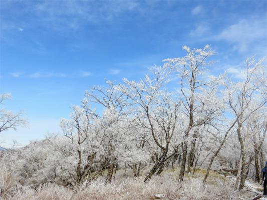 丹沢主脈縦走路霧氷が綺麗