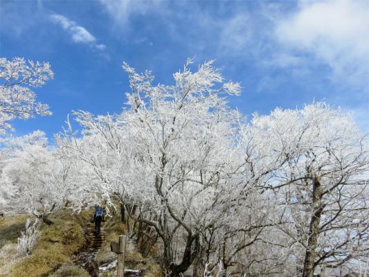 霧氷の景色が美しい丹沢三峰