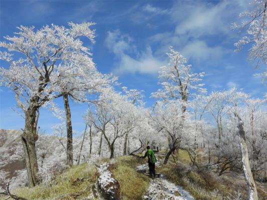 霧氷も丹沢三峰縦走路では見れない