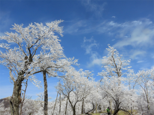 美しい丹沢の霧氷