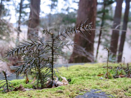 木々モリモリ芽吹いて