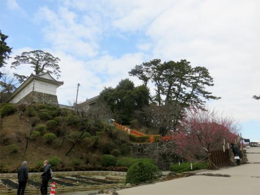 小田原城の紅梅のお花