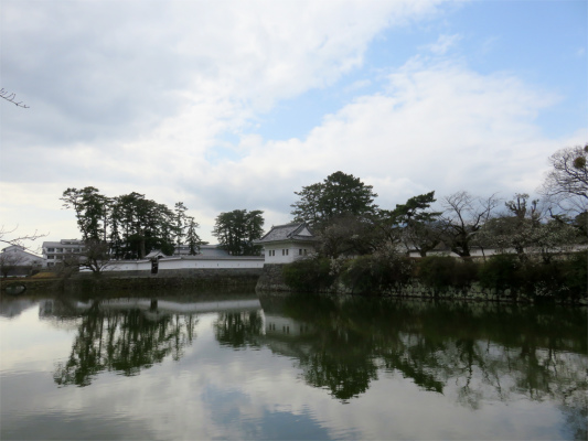 小田原城お堀桜