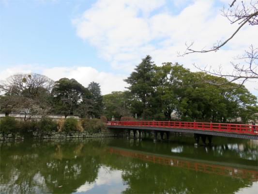 小田原城お堀周辺桜並木