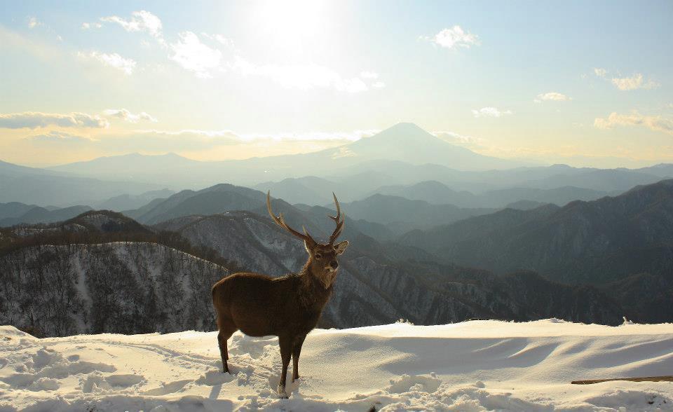 山の写真丹沢山塊の塔ノ岳山頂