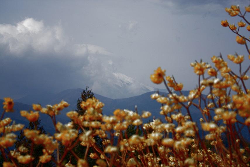 ミツバ岳から富士山