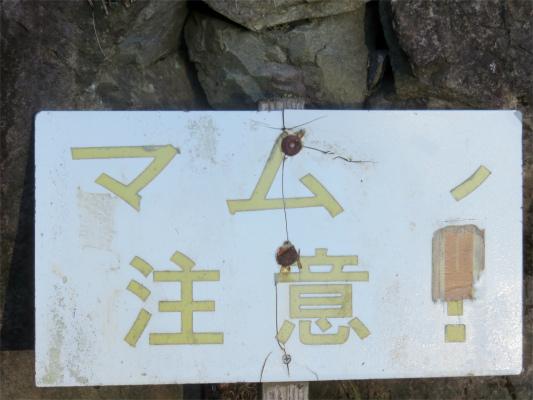 八王子城址周辺マムシ