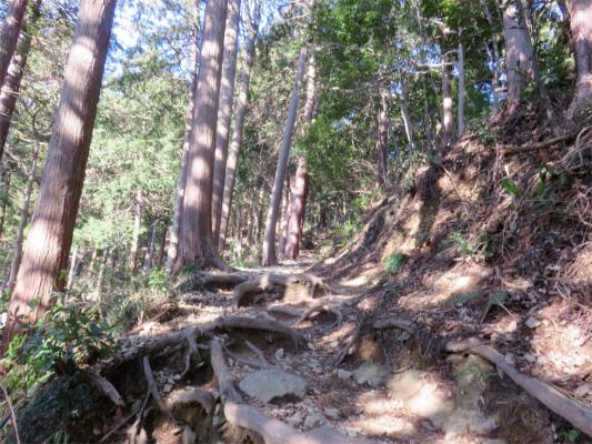 八王子城址は、中々の山登り