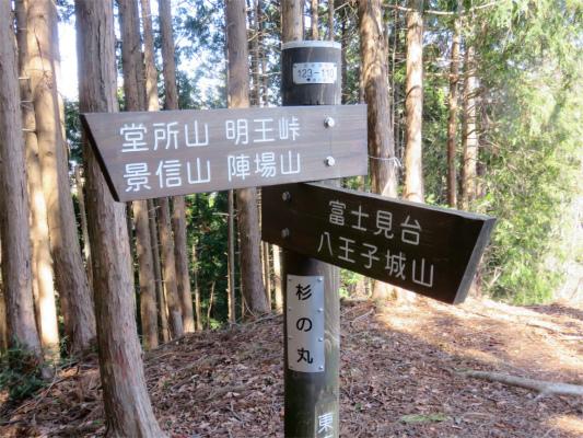 北高尾山稜杉の丸