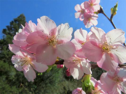 八王子城址を絡めて北高尾山稜を縦走中の花