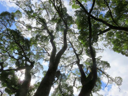 大木がとても綺麗