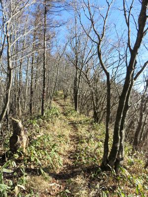 今倉山から菜畑山への癒しの縦走路