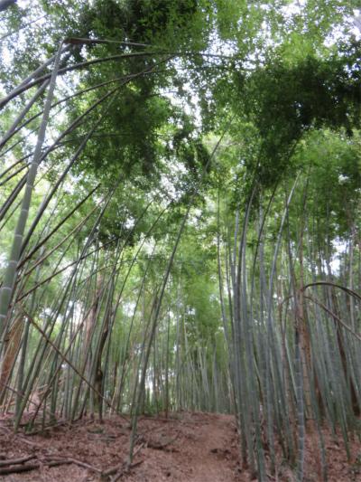 嵐山から大明神山石老山へ進むと竹林